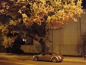 Brooklyn Spring with Car