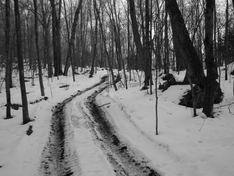 David's Logging Road