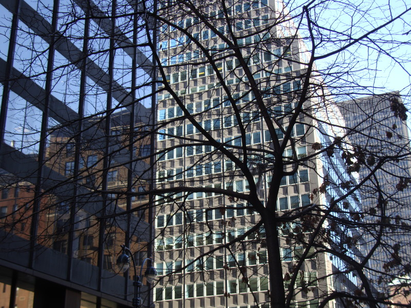 Tree:Office Building