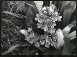 Berkley Flowers