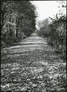 Bike Path with Leaves