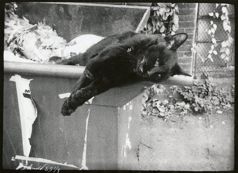 Cat on a Dumpster