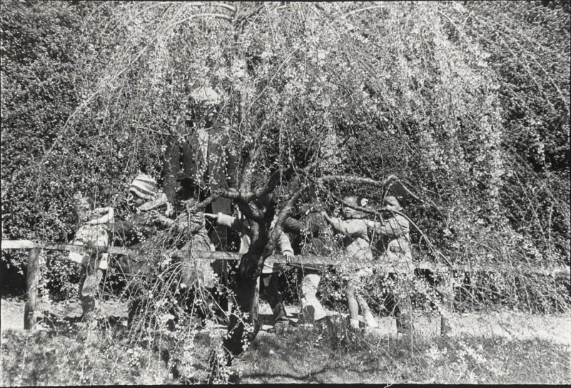 Children Botanical Gardens - SMITH
