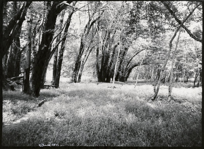 Elwell, Bright Trees