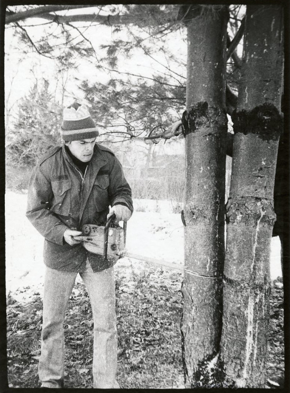 Man Cutting Down Tree with Chain Saw