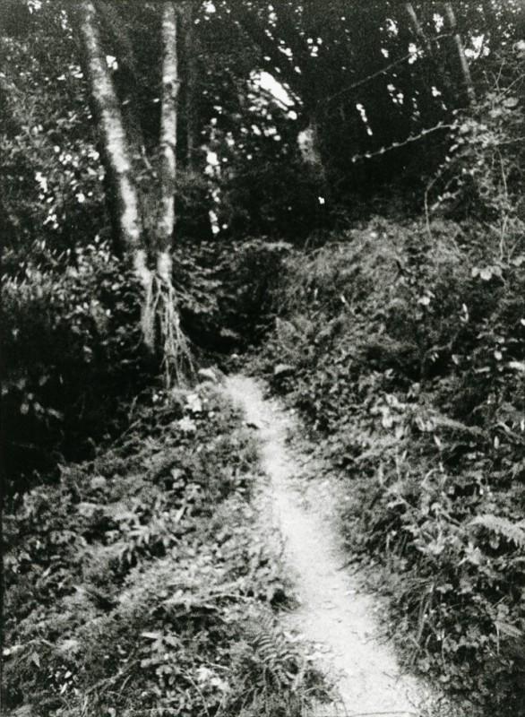 Path Behind San Rafael House