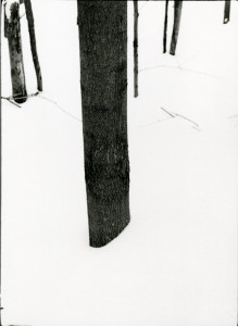 Tree Without Roots (Tree in Deep Snow)