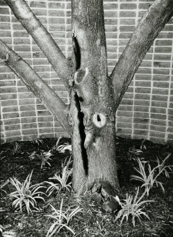 Tree with Gouge and Brick Wall